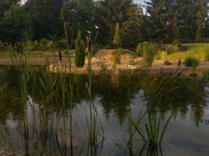 005 Letní zahrada po dešti