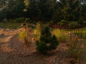 019 Letní zahrada po dešti