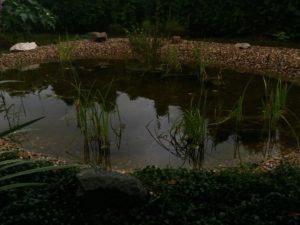 041 Letní zahrada po dešti
